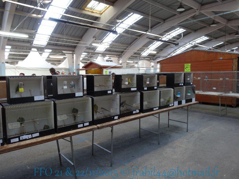 Nationnal FFO 2015 à Niort (79). DSC104258